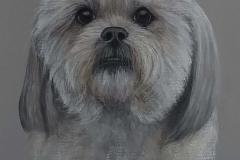 Molly-Lhasa-Apso-scaled