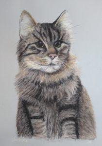 Pet Portrait, Cat, Cat Portrait, Pastel, Artist, Drawing, Painting, hand drawn