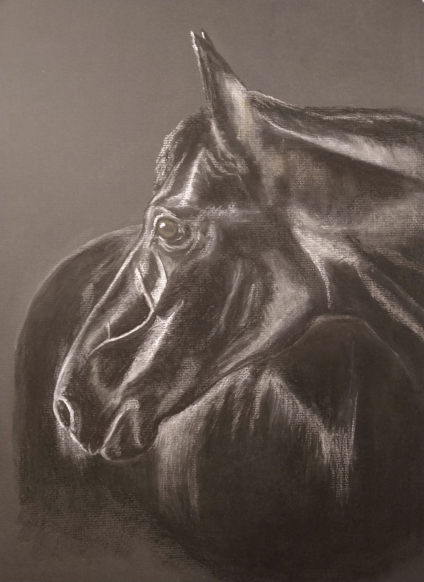 Black Horse, Pet Portrait, horse, horse Portrait, Pastel, Artist, Drawing, Painting, hand drawn