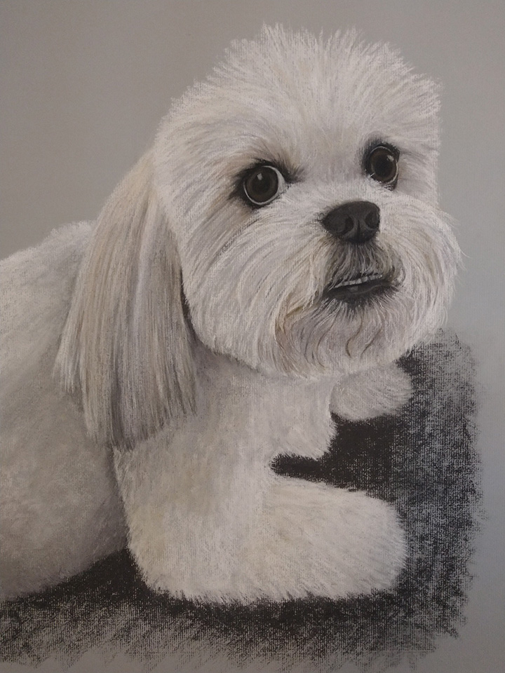 Lhasa Apso, Pet Portrait, Dog, Dog Portrait, Pastel, Artist, Drawing, Painting, hand drawn