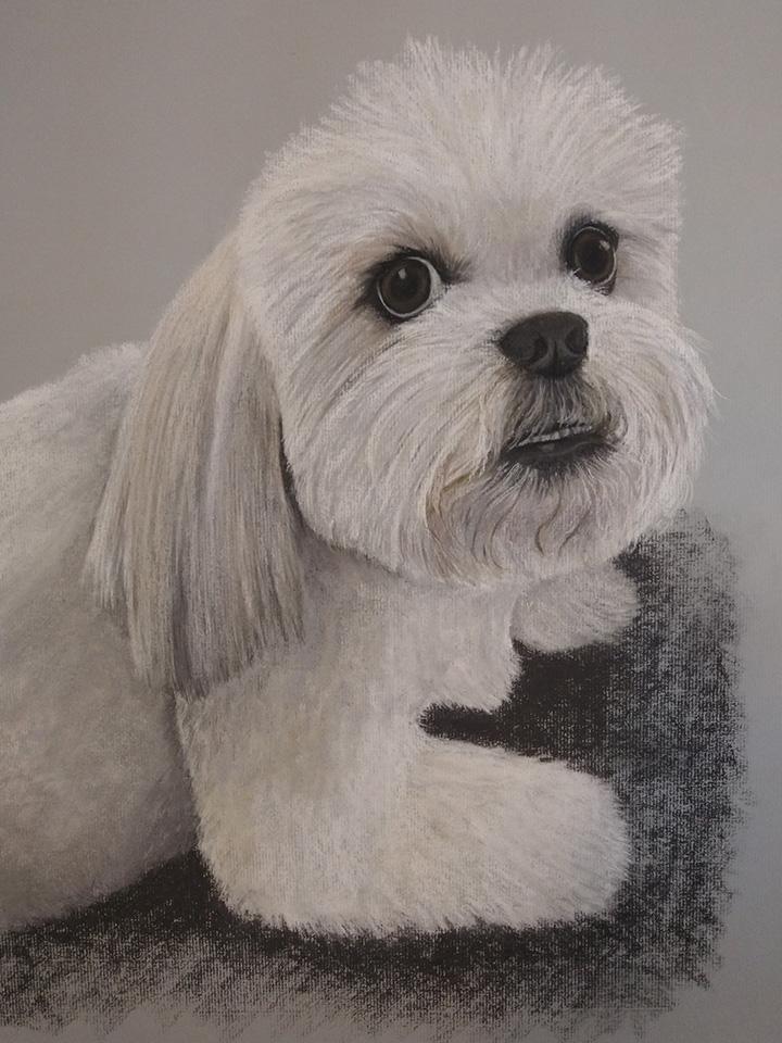Lhasa Apso, Pet Portrait, Dog, Dog Portrait, Pastel, Artist, Drawing, Painting, hand drawn